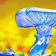 Mushroom Whimsy  Poster by Marie Jamieson
