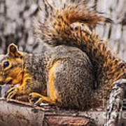 My Nut Poster by Robert Bales