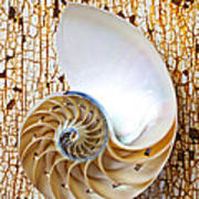 Nautilus Shell On Rusty Table Poster by Garry Gay