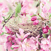 Nest In Soft Pink Poster by Stephanie Frey