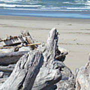 Ocean Beach Driftwood Art Prints Coastal Shore Poster by Baslee Troutman