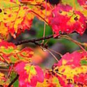 October Maple Poster by Mandi Howard