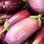 Organic Eggplant Poster by Wendy Connett