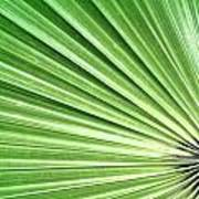 Palm Leaf Poster by Rudy Umans