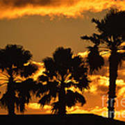 Palm Trees In Sunrise Poster by Susanne Van Hulst