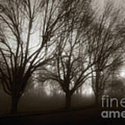 Park In Fog Poster by Susan Isakson