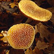 Patterned Orange Brown Fungi Growing Poster by Jason Edwards