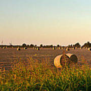 Peanut Field Bales 1 Poster by Douglas Barnett