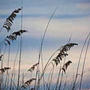 Pensacola Beach Sea Oats Poster by Steven Gray