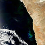 Phytoplankton Bloom Off Nambia Poster by Nasa