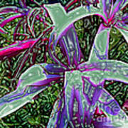 Plasticized Cape Lily Digital Art Poster by Merton Allen