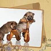 Pomeranian 1 Poster by Everet Regal