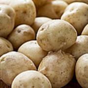 Potatoes Poster by Elena Elisseeva