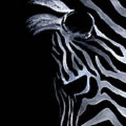 Profile Of Zebra Poster by Natasha Denger