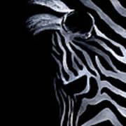 Profile Of Zebra Poster by Natasha Denger
