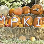 Pumpkins P U M P K I N S Poster by James BO  Insogna