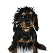 Puppy Bathtime Poster by Jane Rix