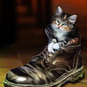 Puss In Boot Poster by Julie L Hoddinott