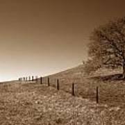 Ranch Road Oak Poster by Kathy Yates