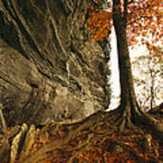 Raven Rock And Autumn Colored Beech Poster by Raymond Gehman