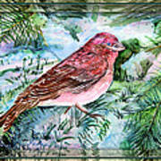 Red Finch Poster by Mindy Newman