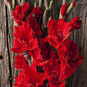 Red Gladiolus Poster by Garry Gay