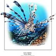 Red Lionfish Poster by Owen Bell