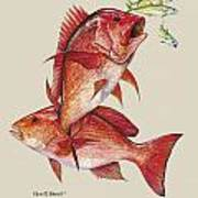 Red Snapper Poster by Kevin Brant