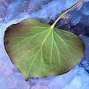 Reverse Ivy On Blue Poster by Beth Akerman