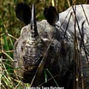 Rhino Poster by Tues Rahman