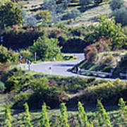 Road Winding Through Vineyard And Olive Trees Poster by Jeremy Woodhouse