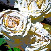 Rose 126 Poster by Pamela Cooper