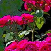 Rose 135 Poster by Pamela Cooper