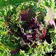 Salad Maker Poster by Susan Herber