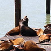 Sea Lions At Pier 39 San Francisco California . 7d14314 Poster by Wingsdomain Art and Photography