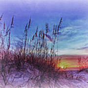 Sea Oats 5 Poster by Skip Nall