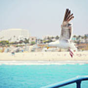 Seagull Flying Poster by Libertad Leal Photography
