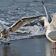 Seagull Treasures Poster by Debra  Miller