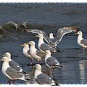 Seagulls Gathering Poster by Debra  Miller