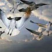Seagulls In Flight Poster by Natural Selection Ralph Curtin
