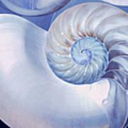 Seashell. Blue Version  Poster by Jenny Rainbow
