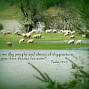 Sheep Grazing Scripture Poster by Cindy Wright