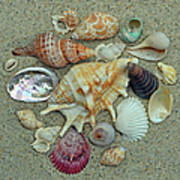 Shell Collection 2 Poster by Sandi OReilly