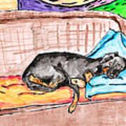 Sleeping Rottweiler Dog Poster by Jera Sky