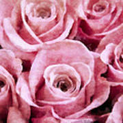 Soft Pink Roses Poster by Angelina Vick