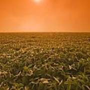 Soybean Field On A Misty Morning Poster by Dave Reede