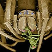 Spider Eating A Fly, Sem Poster by Volker Steger