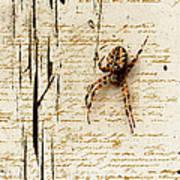 Spider Letter Poster by Yvon van der Wijk