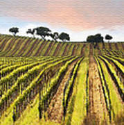 Spring Vineyard Poster by Sharon Foster