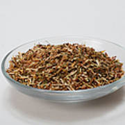 St Johns Wort Dried Herb Poster by Photo Researchers, Inc.